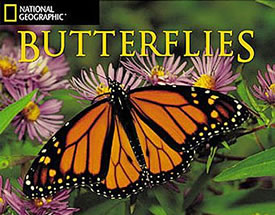 National Geographic Butterfly Calendar