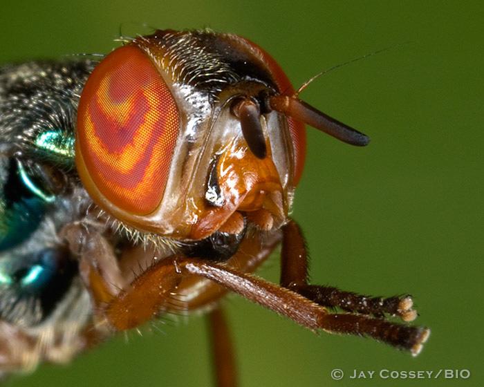 Signal Fly