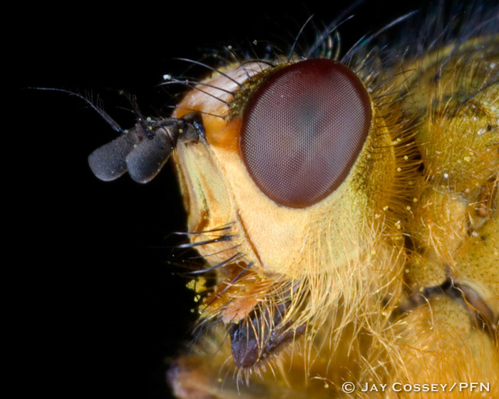 Dung Fly profile