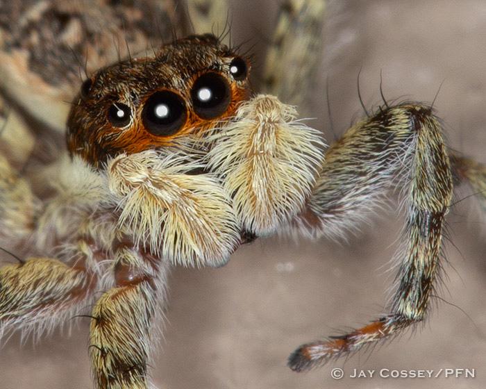 Spiders Mites