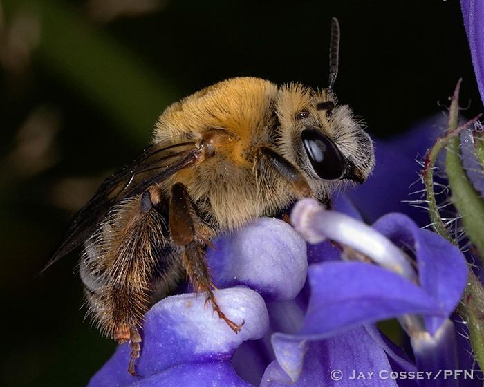 Bees Wasps Sawflies