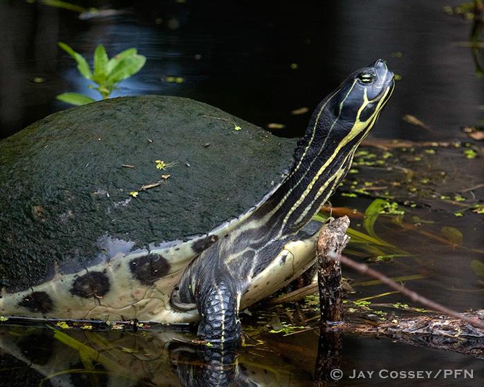Turtles Tortoises