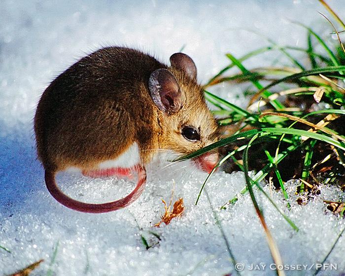 Small Mammals
