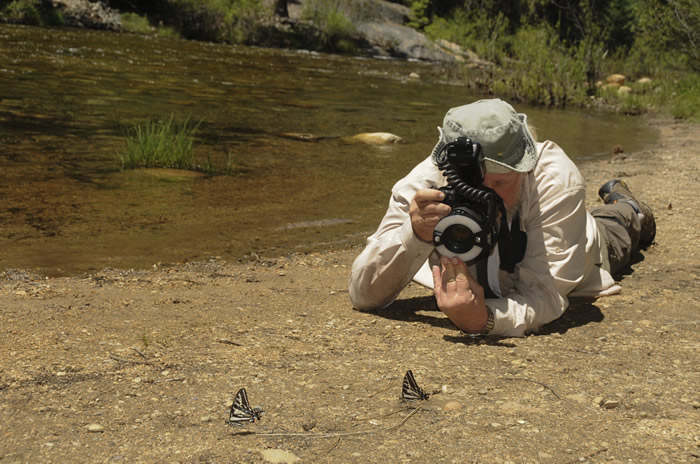 Jay photographing Pale Tiger Swallowtails in Yosemite (© Kristen D'Angelo)