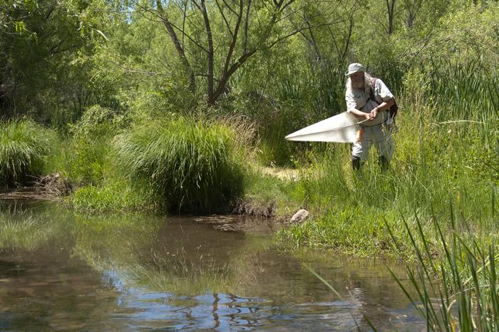 Jay Cossey fieldwork at Dead Horse Ranch SP AZ